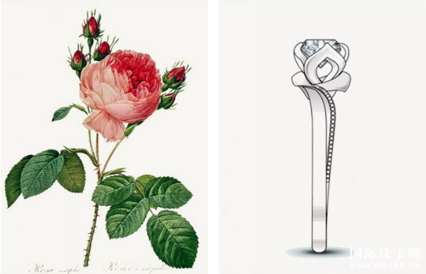 金嘉利:一朵玫瑰,一个rosever的爱情故事!